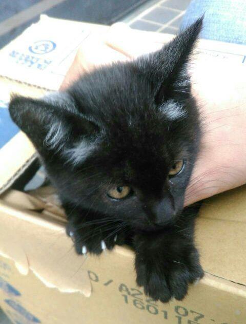 黒猫のクロちゃん(♂)